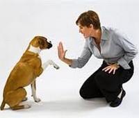 Обучение владельцев собак