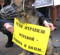 Травля собак в Одессе