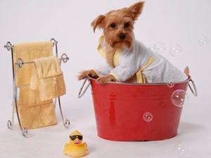 Косметика для собак