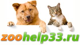 Помощь бездомным животным во Владимире