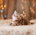 Котенок и Новый год