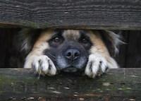 Помощь бездомным животным в Пензе