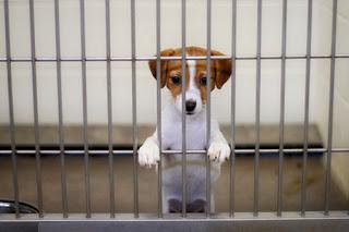Психика собак из приюта