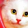 аватар: Miss_Sweety