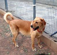 Помощь бездомным животным в Одессе