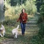Аспекты выгуливания собак