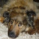 Отправка собак в Германию