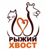 Волонтёрское движение помощи животным Рыжий хвост