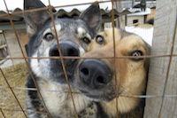 Приют для животных в Рязани