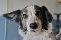Помощь бездомным животным в Ростове-на-Дону