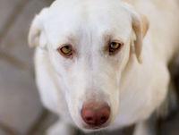 Помощь бездомным животным в Екатеринбурге