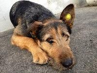 Помощь бездомным животным в Подмосковье