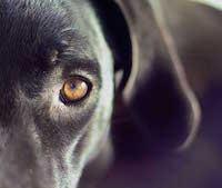 Помощь животным в Боровичах