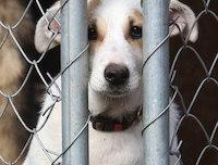 Помощь бездомным животным в Новосибирске